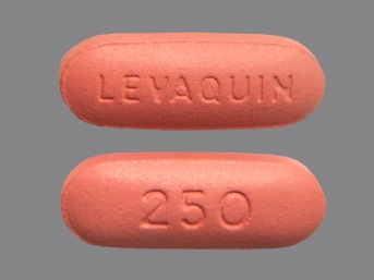 medicines for urine infection-Levaquin oral